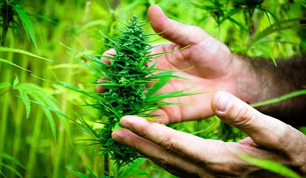 420 là gì? Ý nghĩa của 420 là gì?